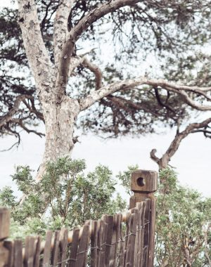 DOMAINE DU RAYOL - @vert_de_gris
