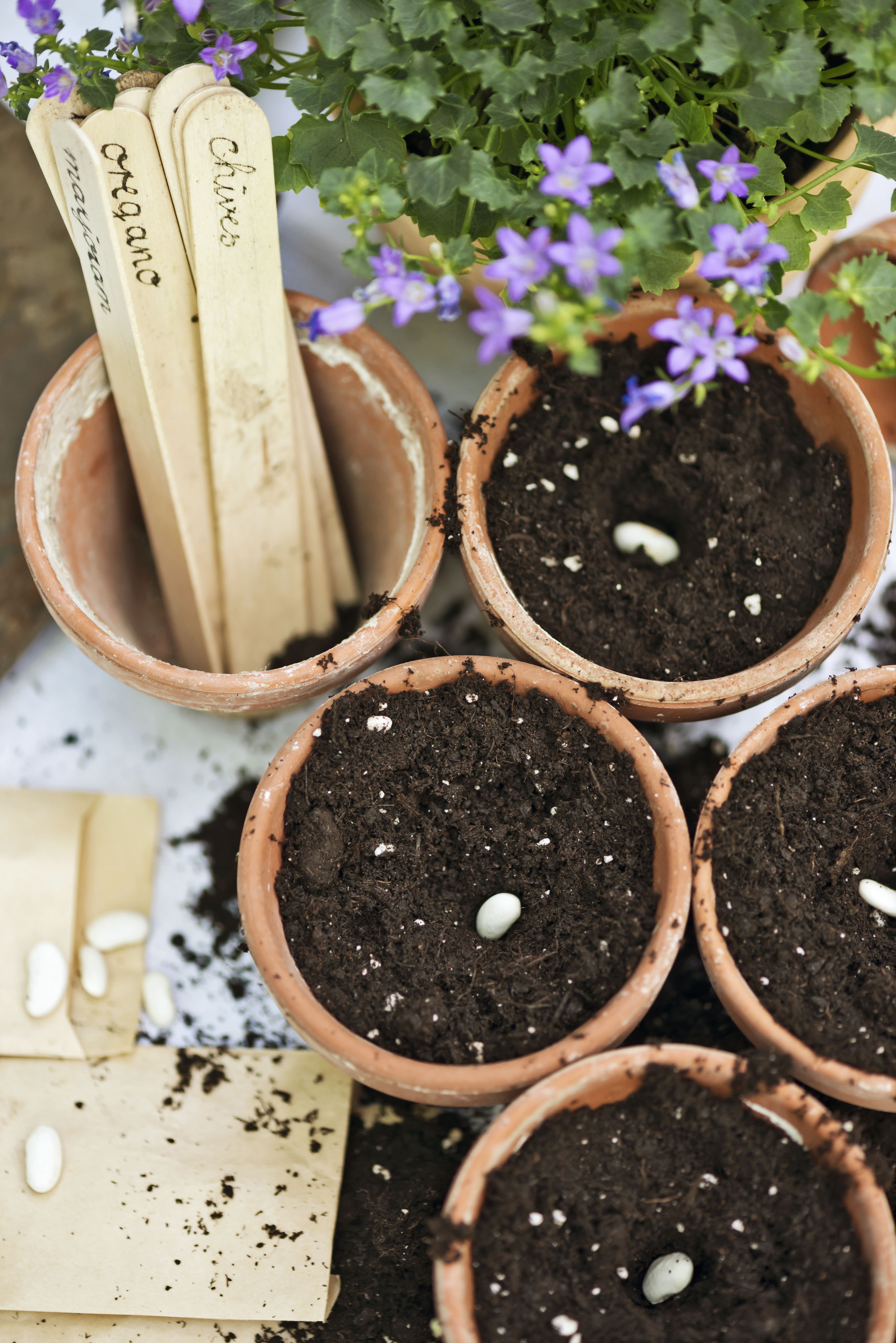 seeds and pots