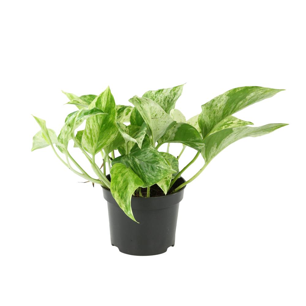Skogluft Mur végétal – J'ai lu – Vert-de-Gris