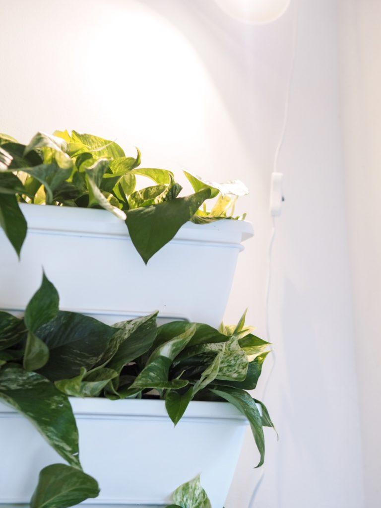Skogluft Mur végétal - J'ai lu - Vert-de-Gris